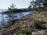 Kostomukshsky reserve