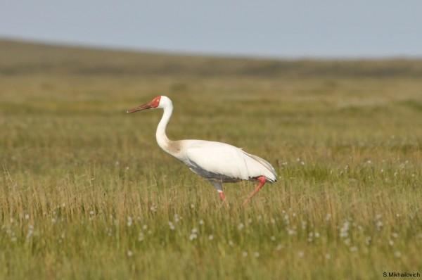 Национальный парк «Кыталык»